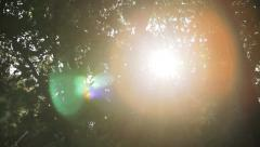 Sunflare In Forest 1 Stock Footage