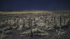 Beautiful Dreamy Whimsical Color Infrared Timelapse Of A Harvested Corn Field - stock footage