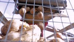 Harvest of fresh potatoes on a conveyor belt - stock footage