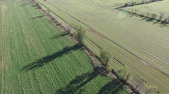 4k aerial over contrasting fields separated by tree line and tractor working - stock footage