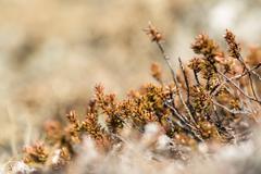 Shrubs in spring - stock photo