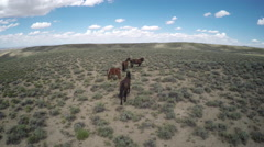 Wyoming Wild Horses - Free roaming Mustangs - Following Shot Stock Footage