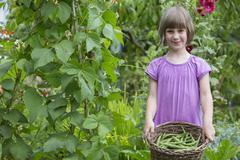 Girl Picking Beans In Vegetable Garden Stock Photos