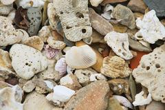 Sell and small stones at the sea shore. - stock photo