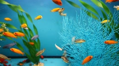 blue aquarium background calm fish swim grass video saver - stock footage