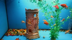 blue aquarium background calm fish swim grass video saver underwater - stock footage
