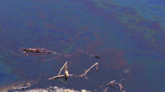 Dragonflies fly over the oil spill and dead plants, pond, water. Stock Footage