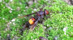Ants carrying bait, wasp Stock Footage