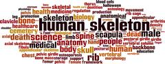 Human skeleton word cloud - stock illustration