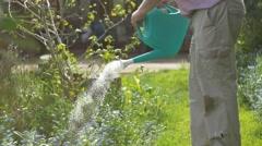 Gardening elderly Senior retired grandfather at man retirement age outdoors - stock footage