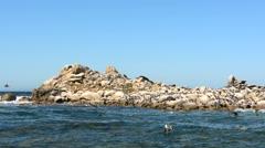 Seagulls Along the Rugged Coast of California - stock footage