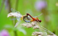 Insect of the steppes Stock Photos