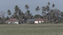 Houses amongst coconut trees at the edge of plantation. Ungraded RAW Stock Footage
