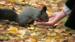 Girl Feeds The Squirrel In The Forest Stock Footage