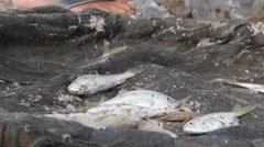 Fresh catched fish in basket,Pangandaran,Java,Indonesia Stock Footage