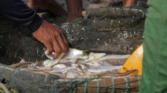 Sorting fresh catched fish in basket,Pangandaran,Java,Indonesia Stock Footage