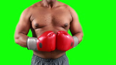 Agressive boxer posing for camera - stock footage