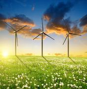 Dandelions field with wind turbines in the sunset. - stock photo