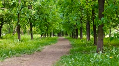 alley in summer park - stock footage