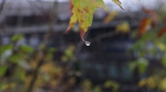 Yellow autumn leaf under first snow near a departing train Stock Footage