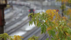 Leaving autumn train with first snow on leaf Stock Footage