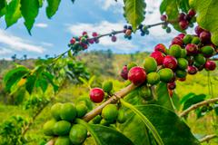 Coffee farm in Manizales, Colombia Stock Photos