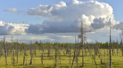 Time lapse of clouds in Siberian taiga - stock footage