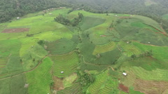 Green Terraced Rice Field in Chiangmai - stock footage