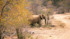 Elephant mother and her young crossing dirt road in Africa Stock Footage