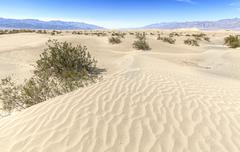 Sand dunes in Death Valley National Park, California, USA. Stock Photos