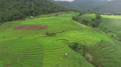 Green Terraced Rice Field in Chiangmai - stock footage