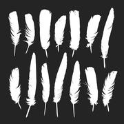 Feathers silhouettes set - stock illustration