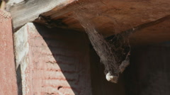 Old web in a barn - stock footage