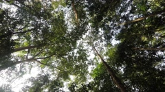treetops in the rain forrest north sulawesi, indonesia - stock footage