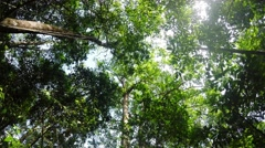 Stock Video Footage of treetops in the rain forrest north sulawesi, indonesia
