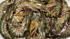 Black tiger prawns close up rotation on white background. Stock Footage