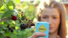 Woman Picking Off Blackberry and Eating It Stock Footage