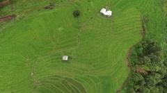 Green Terraced Rice Field in Chiangmai Stock Footage