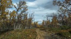 Motorized time lapse dolly shot across foot path between autumn trees Stock Footage