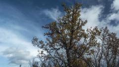 Autumn colors and good weather clouds, motorized timelapse Stock Footage