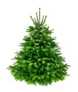 Perfect lush fir tree on pure white - stock photo