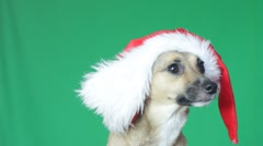 Cute dogs muzzle in a Santa Claus hat on a green screen Stock Footage
