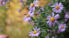 Blooming flowers after rain Stock Footage