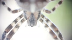 Big scary spider - macro shot - stock footage