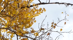 Tree branch dances in the wind during fall. Slow motion. Stock Footage