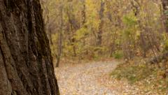 Leaves fall to the ground in autumn. Focus pull from tree in foreground. - stock footage