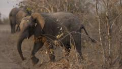 Young Elephant Kicking up Evening Dust - Slow Motion - stock footage