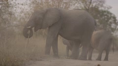 Baby Elephant Plays between Mothers Legs - Slow Motion - (3) Stock Footage