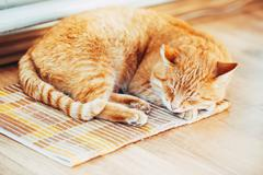 Red Cat Male Kitten Sleeping In His Bed On Laminate Floor - stock photo