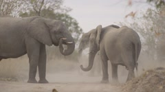 Elephant Herd Throwing Dust on there Backs - Slow Motion - (2) - stock footage